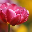 Thinking Spring by Lynne Morris
