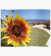Sunflower Tanna Island Vanuatu Poster