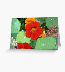Colours of the Garden Bed Greeting Card