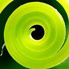 Swirl by Tara Lemana