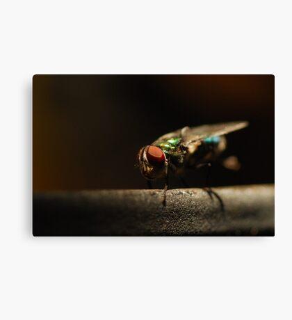 Pretty Pest Canvas Print