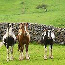 Posing horses by EUNAN SWEENEY