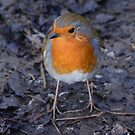 Redbreast by Paul Gibbons