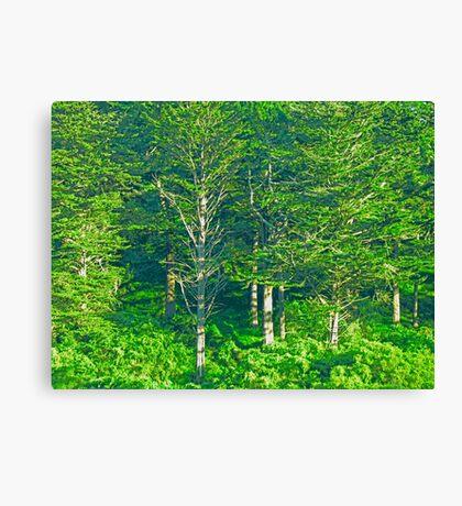 Bare Tree photo painting Canvas Print