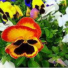 Pretty Pansy Garden  by Virginia  McGowan