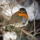 Flirty Robin by Katarina Kuhar