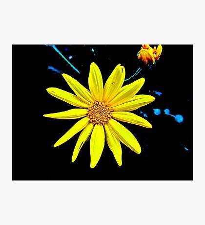 A Splash of Sunshine Photographic Print