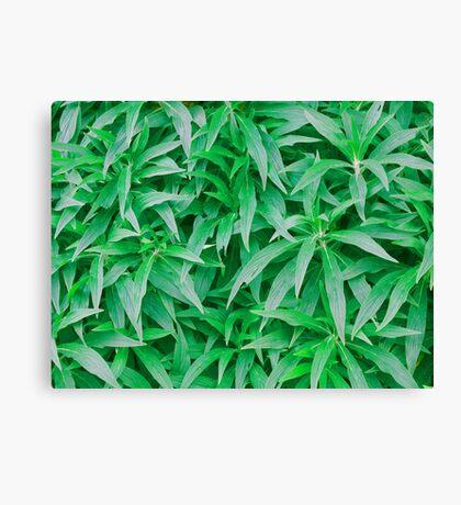 Tropical Plants photo painting Canvas Print