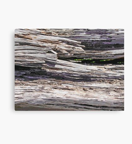 Driftwood photo painting Canvas Print
