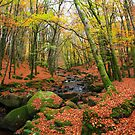 Autumn in Wicklow.Ireland by EUNAN SWEENEY