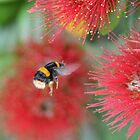 Bumble One by lizdomett
