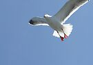 seagull  by tego53