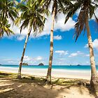 Elnido, Palawan, Philippines - Palm-Lined Beach by Bobby McLeod