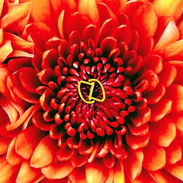Fire Flower by DahnDahlas