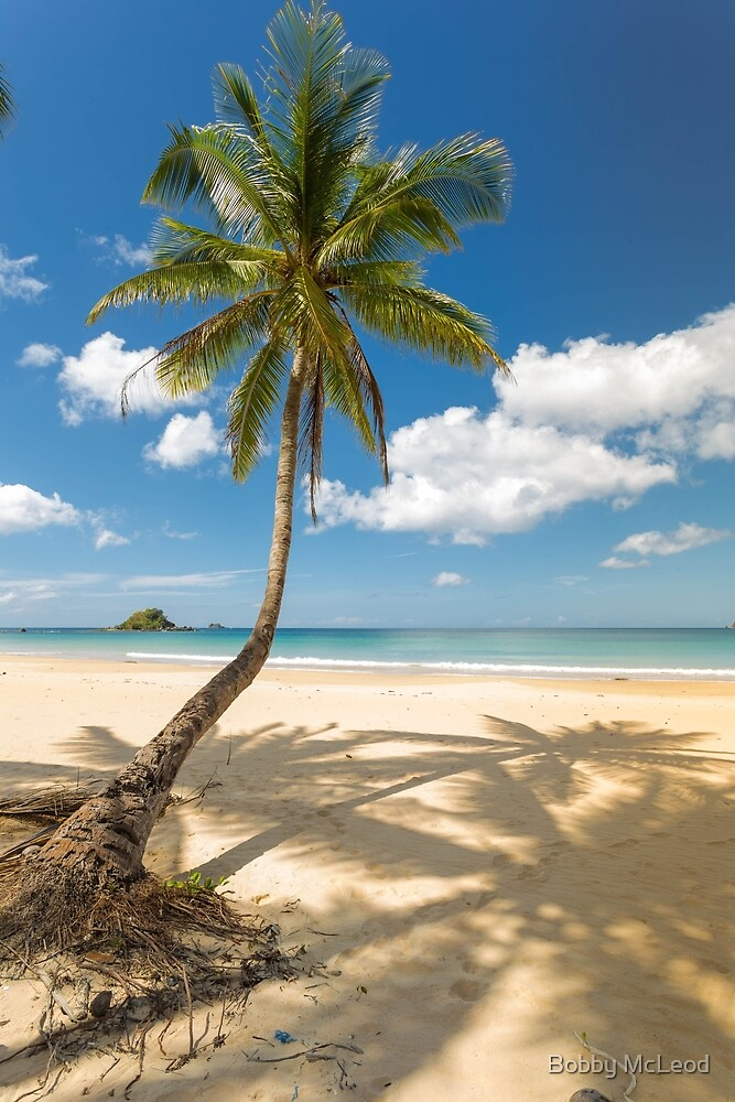 Elnido, Palawan, Philippines - Palm On The Beach by Bobby McLeod