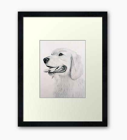 Golden Retreiver Framed Print