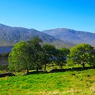 Connemara  landscape.Ireland by EUNAN SWEENEY
