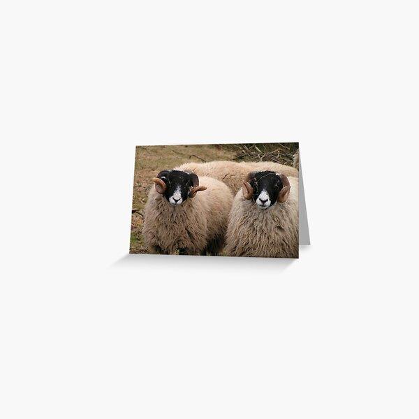 Portrait of Swaledale Ewes Greeting Card