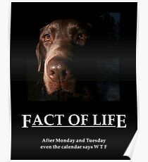 ~ Fact Of Life ~ Poster
