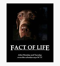 ~ Fact Of Life ~ Photographic Print