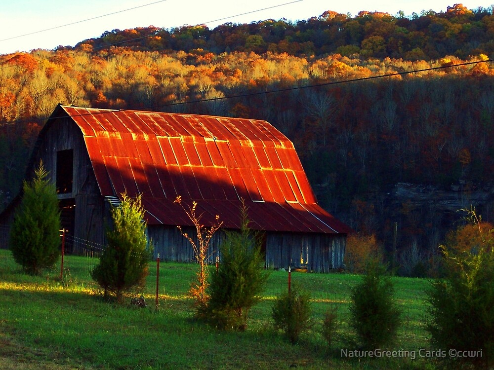 The Red Roof by NatureGreeting Cards ©ccwri