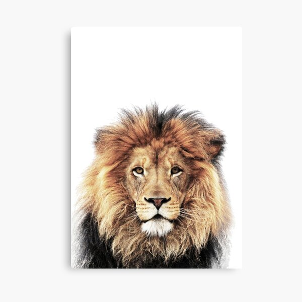 Canvas pictures Lion Animals Africa Nature Wall pictures XXL art print holding Cushion 26