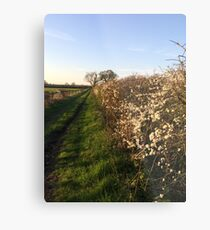Grassy Oxfordshire Lane in the Evening Sunshine Metal Print