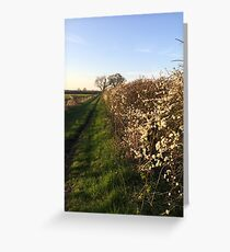 Grassy Oxfordshire Lane in the Evening Sunshine Greeting Card