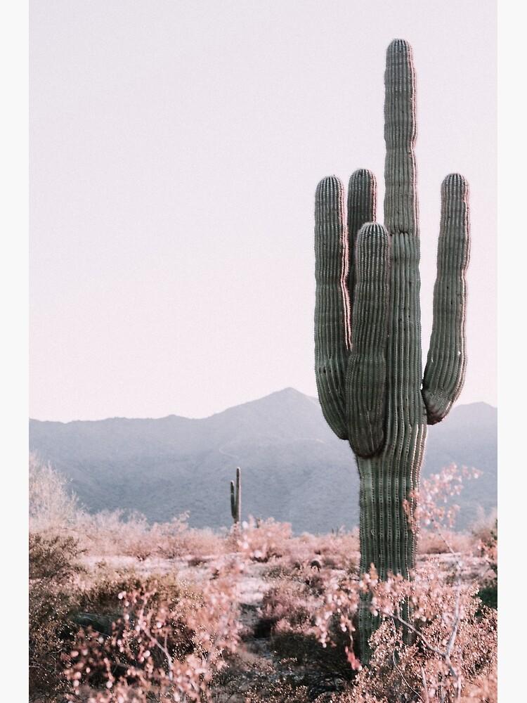 Desert Cactus by studioseven