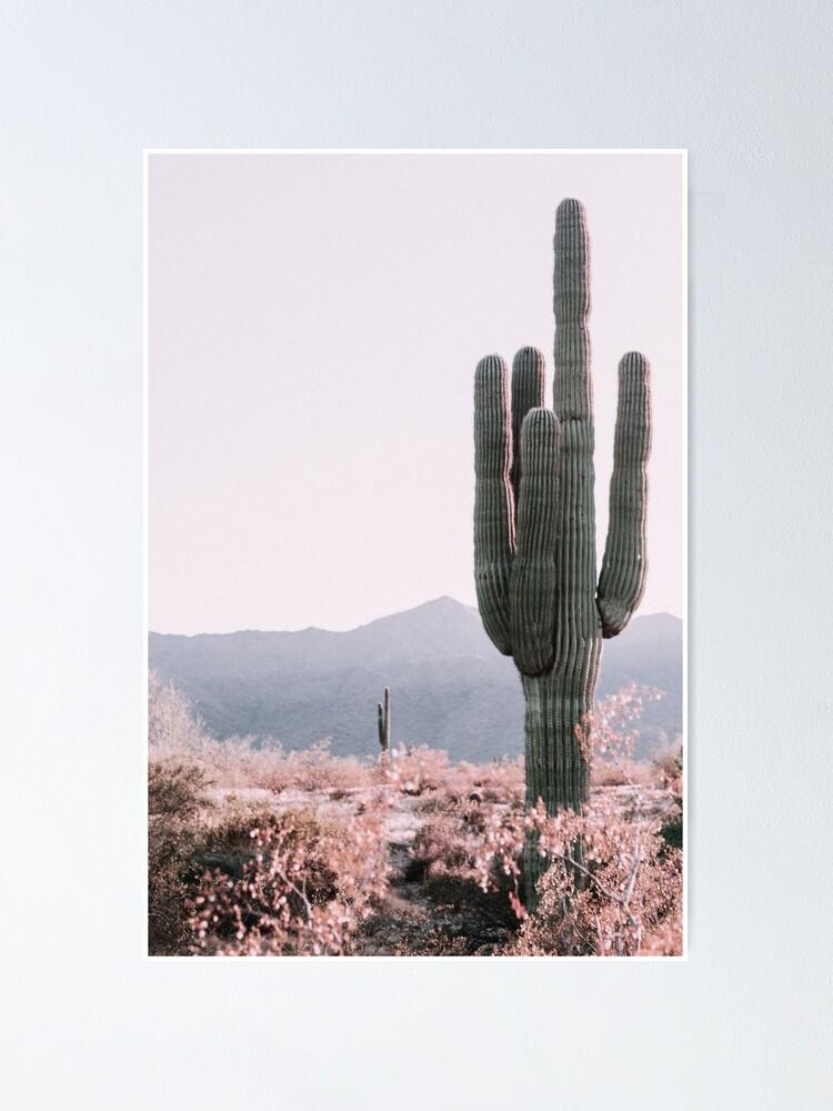 Alternate view of Desert Cactus Poster
