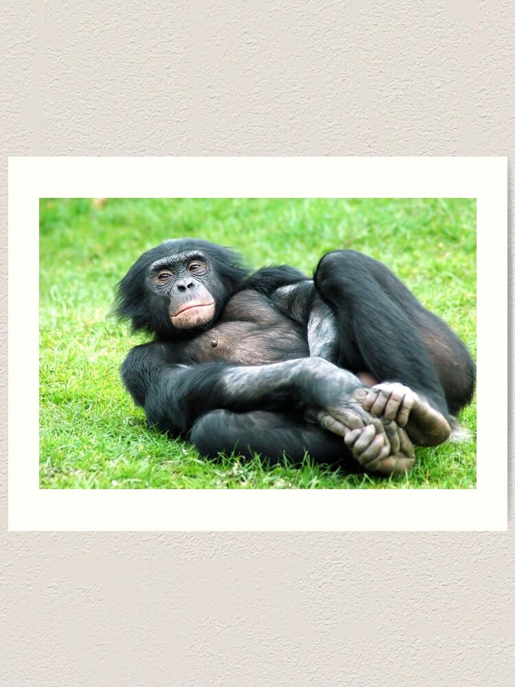 Alternate view of Bonobo Aerobics Art Print