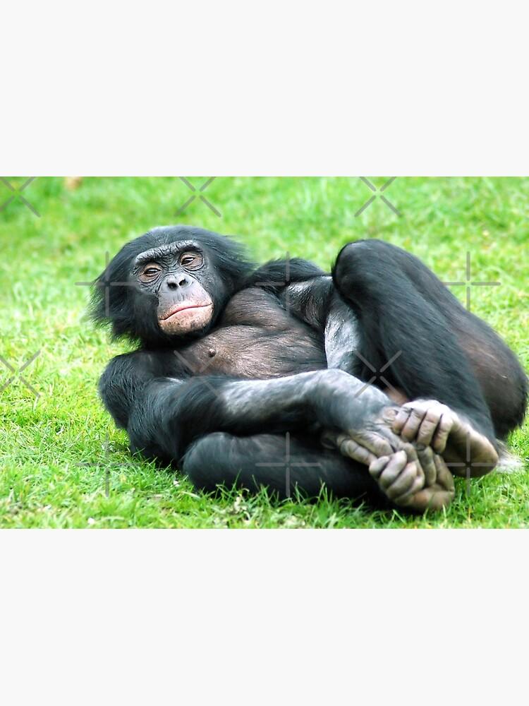 Bonobo Aerobics by senninha