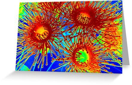 Gum blossom - a little brighter by EdsMum