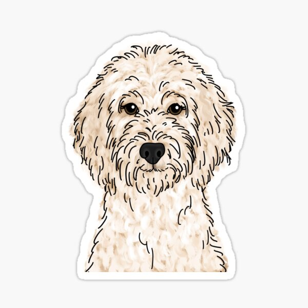 Cream Goldendoodle  Sticker