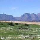South Africa by Paul Plunkett
