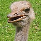 """""""Smiling"""" Ostrich by lezvee"""
