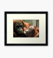 Mum and bubs (sucking her thumb), Orangutan. Framed Print