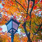 Red maple with lamp by Silvia Ganora