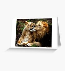 Nuzzling lions. Greeting Card