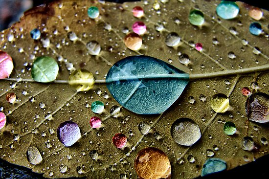 Candy Rain by Jamie Lee