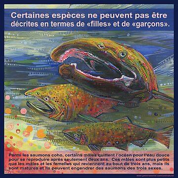 Sauvez le saumon, les trois sexes (Le saumon coho)  by gwennpaints