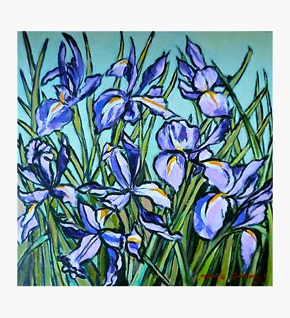 Irises© Photographic Print