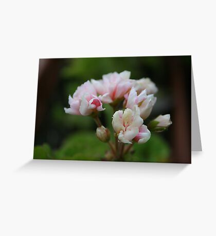 Potted Pelars Greeting Card