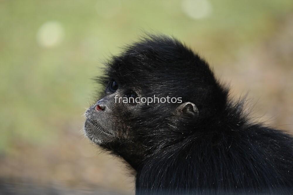Spider Monkey by Franco De Luca Calce
