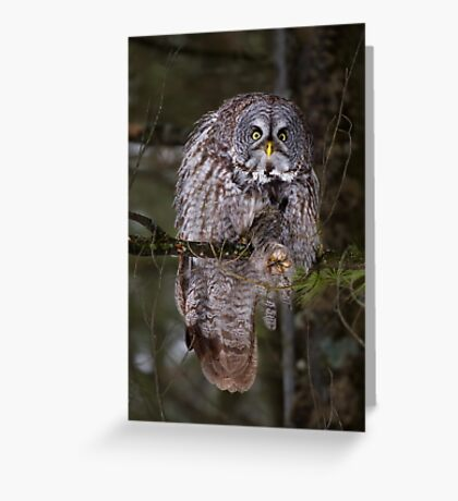 Silence! I keel you! - Great Grey owl Greeting Card