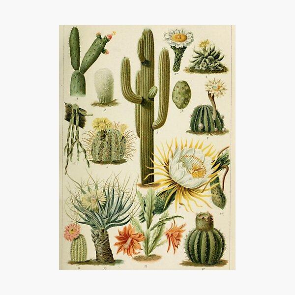 Naturalist Cacti Photographic Print