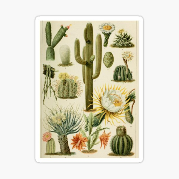 Naturalist Cacti Sticker