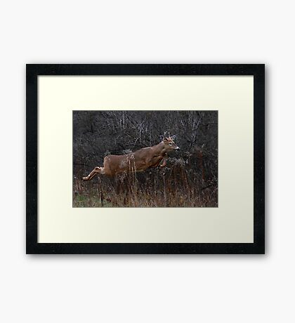 Into the Woods - White-tailed Deer Framed Print