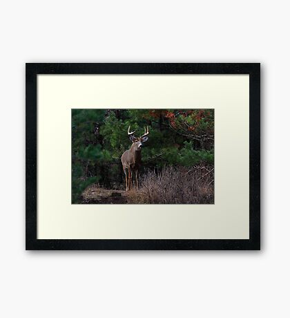 The King is Dead...Long Live the King - White-tailed Deer Framed Print