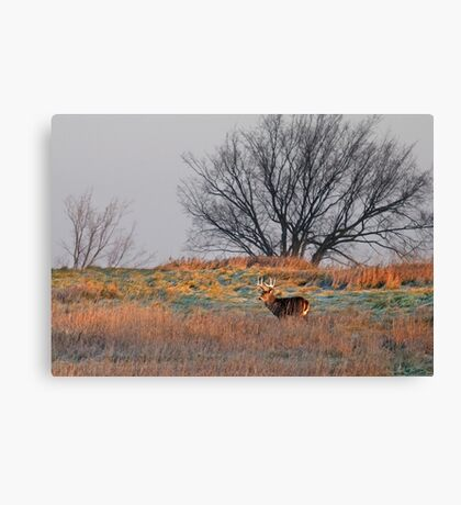 Painted Hill - White-tailed deer Canvas Print